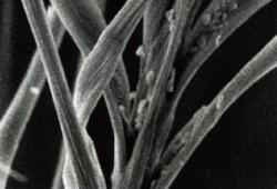 処理前顕微鏡写真